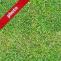 芝生の写真加工パターン